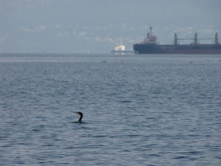 Morski ekosistem ogrožata že tovorni in potniški promet na morju, ptice in ostali morski organizmi pa lahko le nemočno opazujejo nevarnost, ki jim preti.